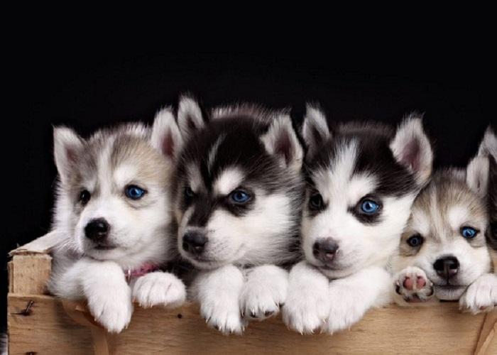 11 mẹo hay giúp chuyển thú cưng an toàn, dễ dàng khi chuyển nhà